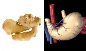 09-Ginger-StomachFoods-That-Look-Like-Body-Parts-1
