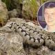 Дејан преживеал 5 каснувања од змија
