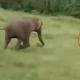 Слон прегази преплашено дете, почина на самото место (Видео)
