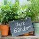 Овие билки го чистат воздухот во домот од загадување, хемикалии, зрачења, дим од цигари
