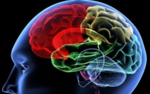 brainimage-250x156
