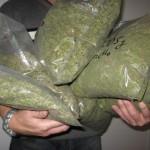 Се бараат берачи на марихуана, плата и до 900 долари дневно