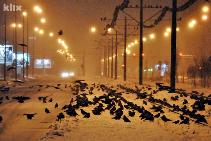 sarajevo-vrane-2
