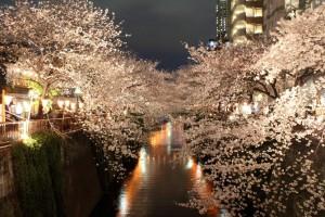 Meguro-reka-Japan.-Japanci-biraju-da-postanu-drvece-kad-umru