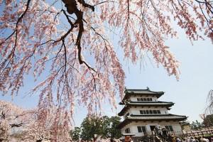 Sinto-hram-Japan.-Tresnjiv-cvet
