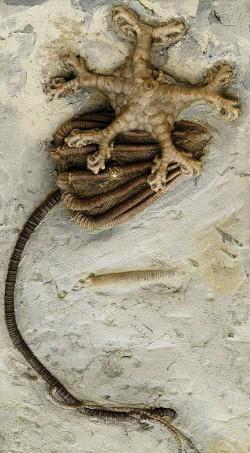 fosil 3
