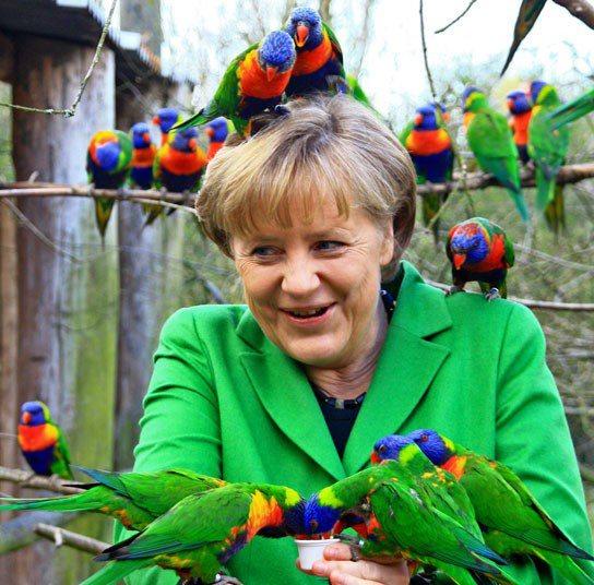 merkel papagal