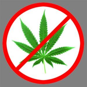 no marihuana