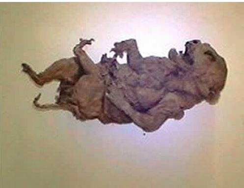 pig mummy alien 1