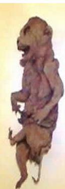pig mummy alien 2