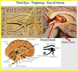 treto oko