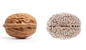 02-Walnut-BrainFoods-That-Look-Like-Body-Parts-1