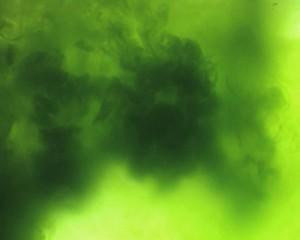 microalgae-300x240