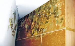 muvla zid