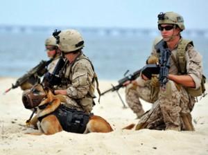 seal-platoon-navy.n