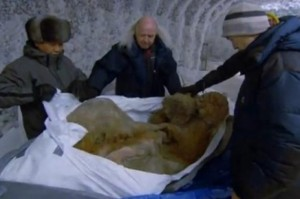 mamut2905