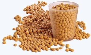 soybean2