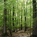 Спас од загадувањето: 30 мин шетање во длабока шума ви го штити имунитетот 2 месеци