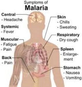 malarija3