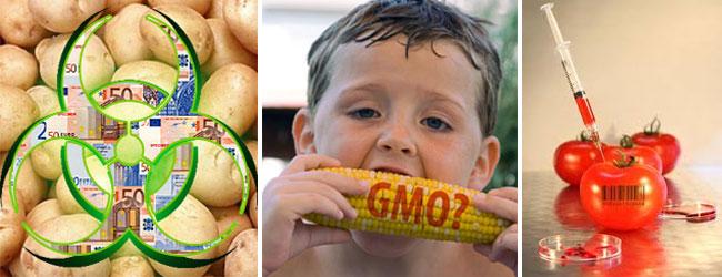 GMo-corn-potato-tomato