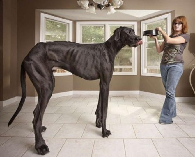 veliki pas1_1382622036_670x0