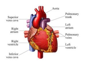 HAARP-sustav-antene-srce