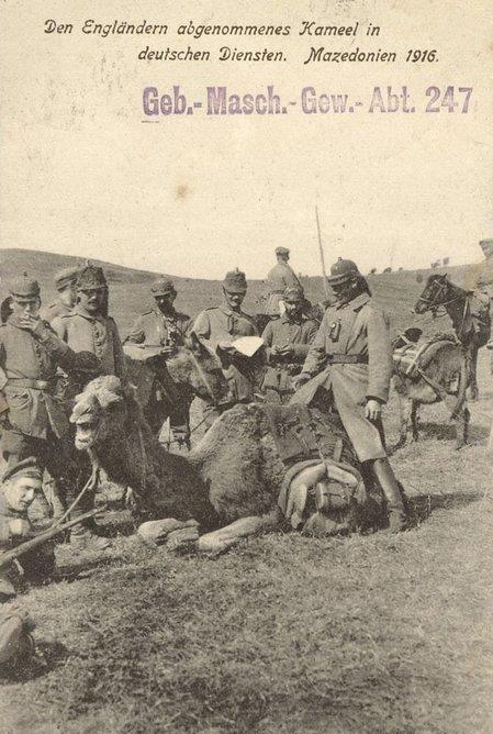 kamili3