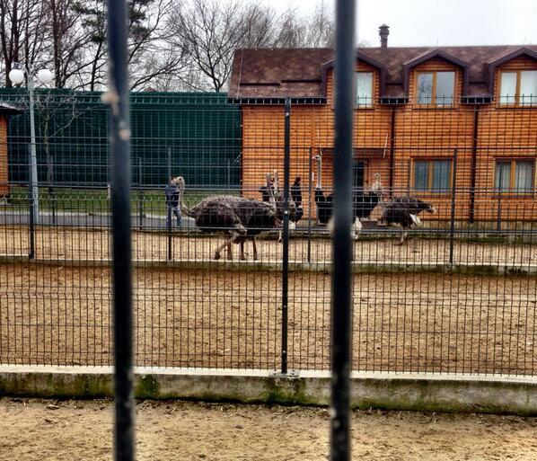 janukovic_zoo