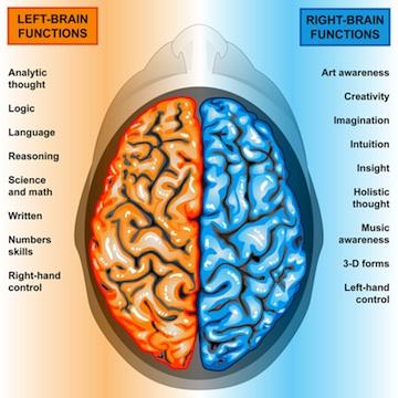 left-right-brain-280