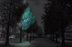 Biljka-Svetlost-1Bioluminescencija