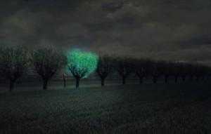 Biljka-Svetlost-Drvece-Bioluminescencija