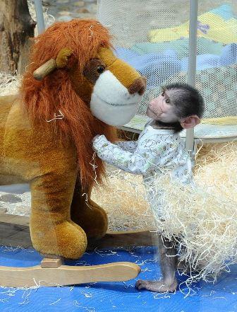 luka majmunce zoo