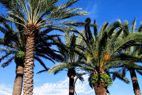 600_palms1-540x360