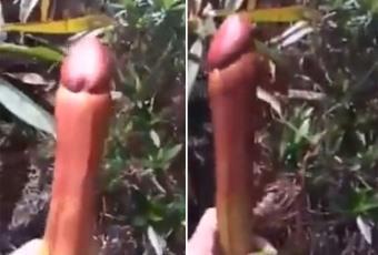 bilka penis