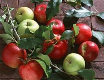 jabolki