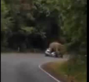 slon-avt