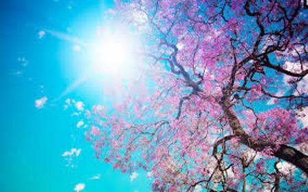 prolet drvo sonce