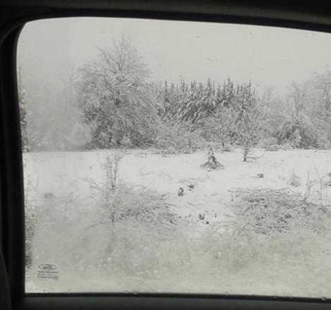 sneg 44