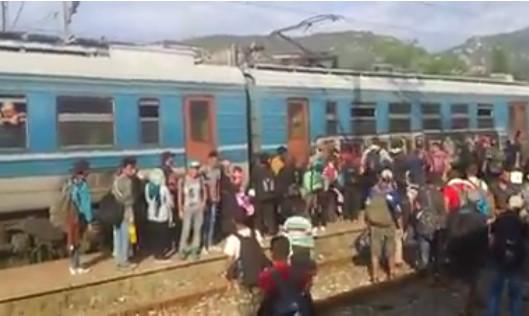 migranti voz 33