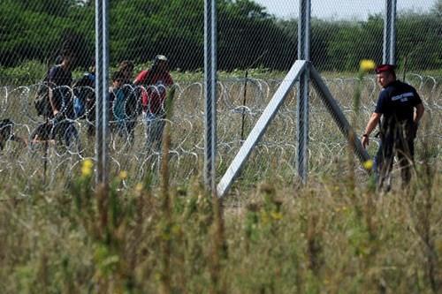 ograda migranti ungarija
