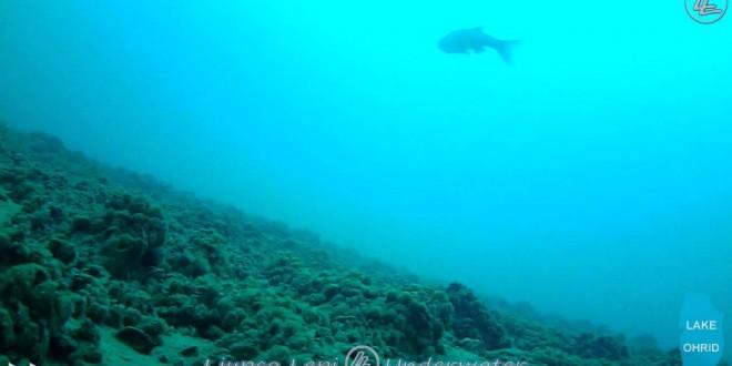 ohrid ezero pod voda