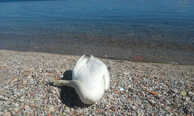 Ohrid news.