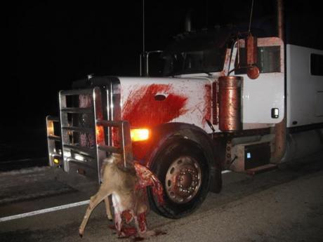 kamion-zivotno