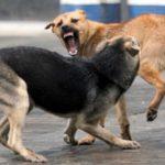 Каде да пријавите и кој ви плака оштета ако ве касне куче
