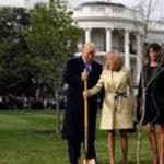 Исчезна дрвото што Трамп и Макрон го засадија кај Белата куќа