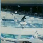 Видео: Жена се сопнала и паднала во базен со ајкули