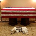 Лабрадорот Сали го испрати починатиот претседател Џорџ Буш