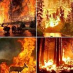 Сибир гори – состојбата е и понатаму вонредна (ВИДЕО)